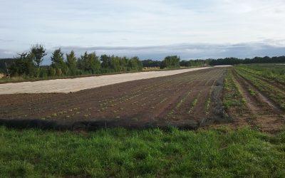 Biodynamik hautnah erleben: Präparate rühren im Morgengrauen