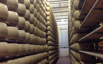 Besuch in der Molkerei – So entsteht der König der Käse